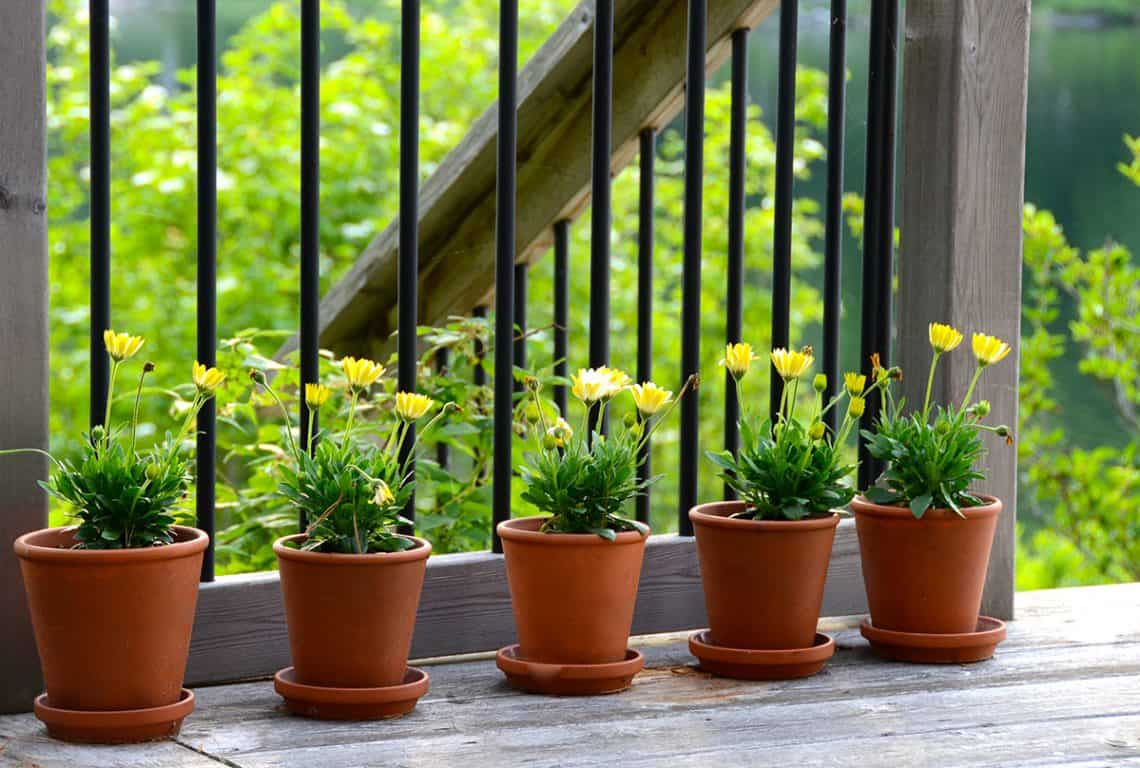 Container Gardening – Part II