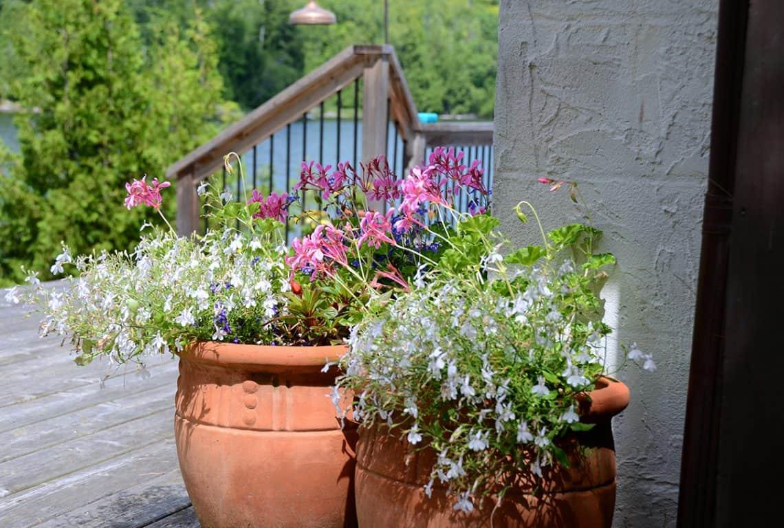 Container Gardening – Part II