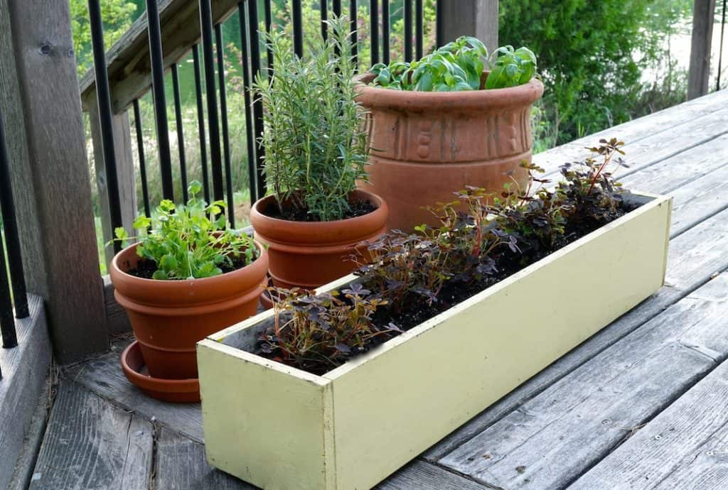 Garden boxes are attractive especially along decks and docks