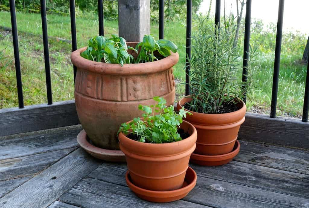 Plant herbs in pots