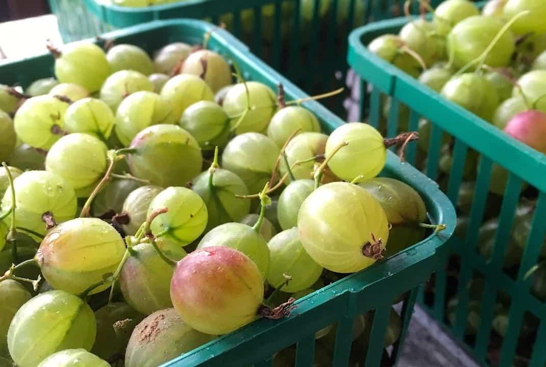 Homemade Gooseberry Jam