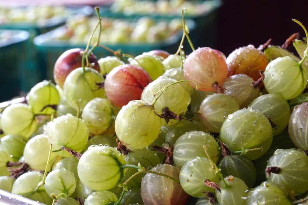 Pints of gooseberries