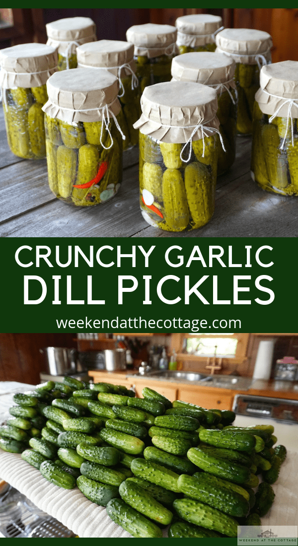 Garlic Dill Pickles Recipe
