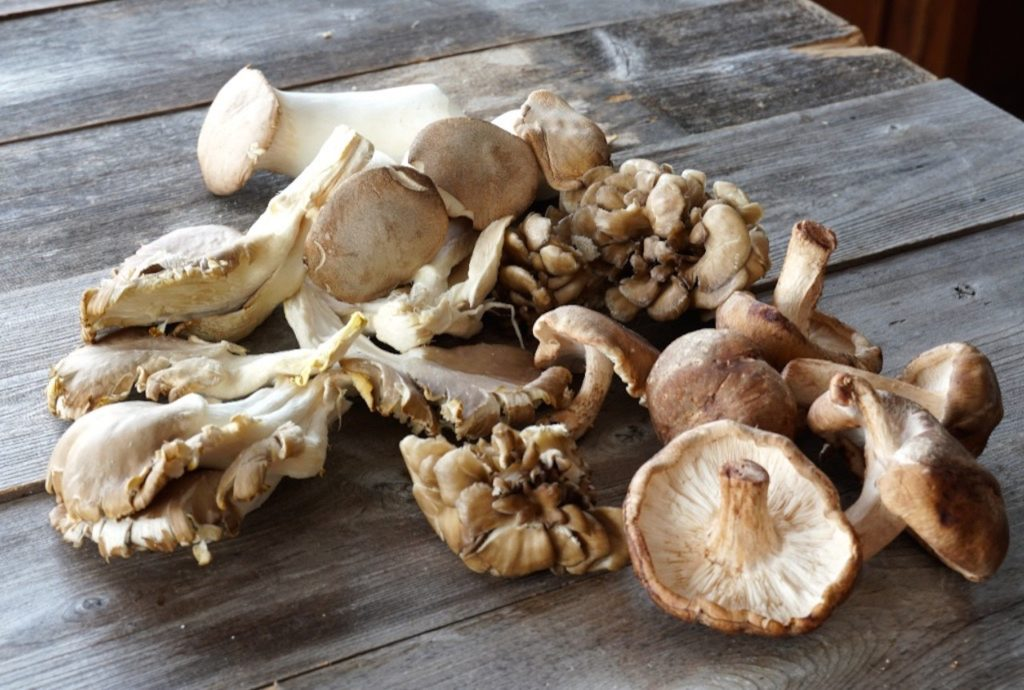 The mushrooms used to make the soup