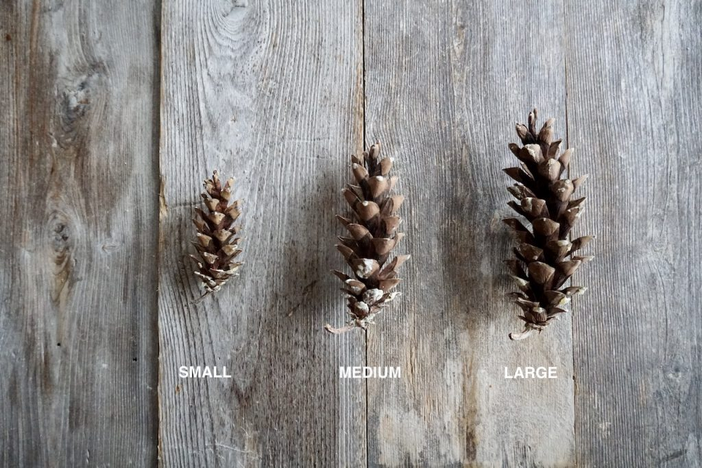 The different sizes of pine cones
